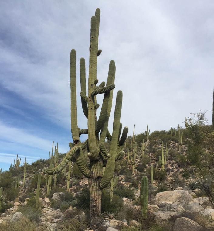 Linda Vista Trail