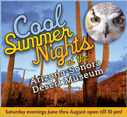 cool summer night desert museum