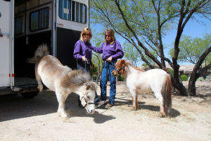 Little Hooves And Big Hearts Visits Clare Bridge: Little Hooves and Big Hearts' Tammy Mockbee, left, and Amy Armour unload their miniature horses Lilly, left, and Dolly at Clare Bridge of Oro Valley for a visit.  - Randy Metcalf/The Explorer