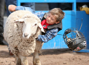Fiesta De Los Vaqueros: Arizonan Tyler Moreno, 4, loses his helmet during the mutton bustin' event.  - Randy Metcalf/The Explorer
