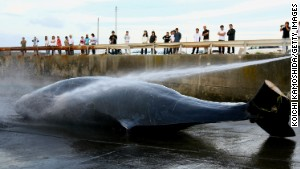 whale hunt Japan