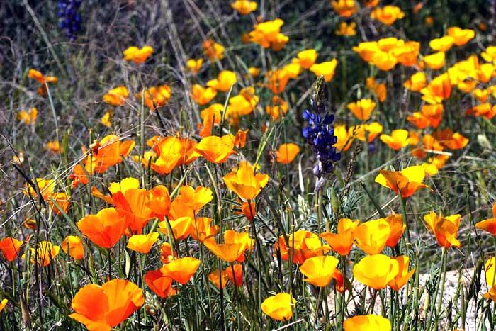 Catalina State Park 3