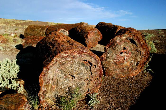 Petrified forest 3