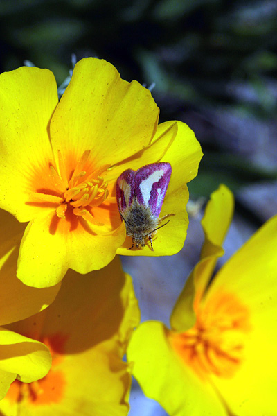Catalina State Park 2