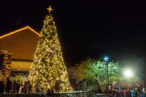 Oro Valley Holiday Tree Lighting Celebration: The Oro Valley Holiday Tree. - J.D. Fitzgerald/The Explorer