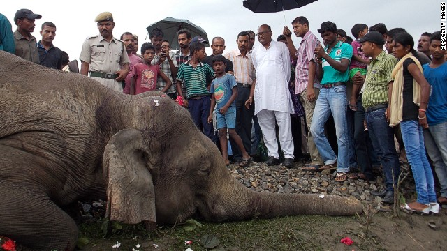 Elephant killed