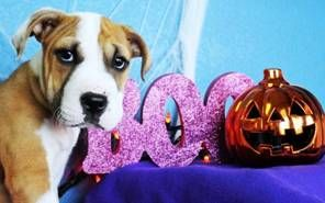 Pet News - No scaredy-cats this Halloween