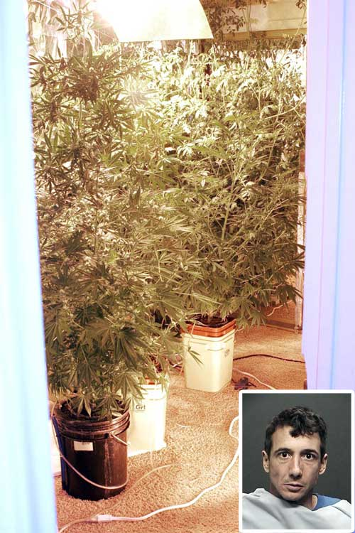 Police find pipe bomb, pot plants