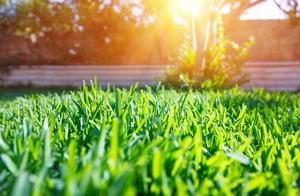 Grass at the park