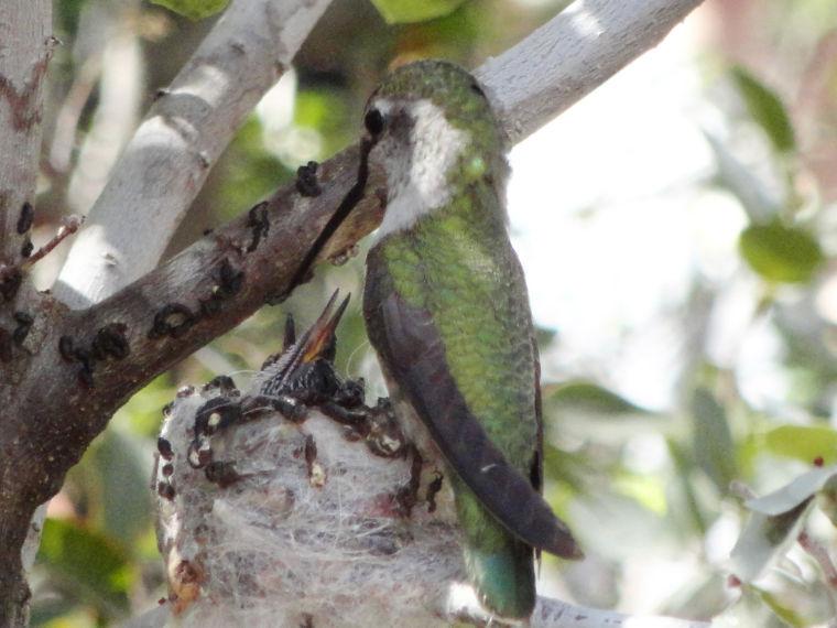 Hummingbird exhibit