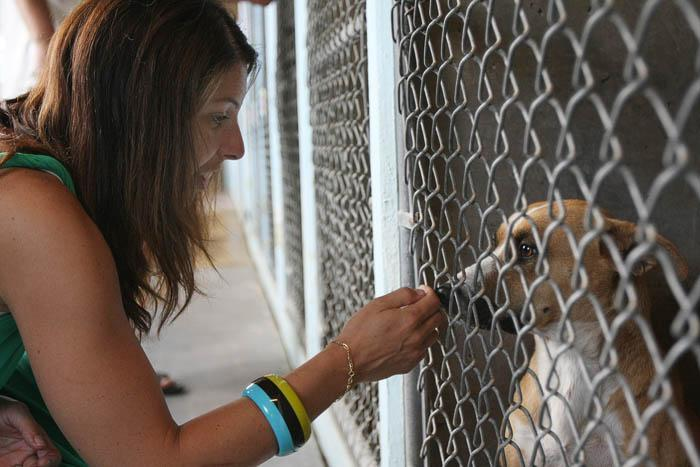 Town considers break with county animal control