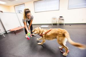 Sublime Canine hopes to impart a new level of communication between dog and owners