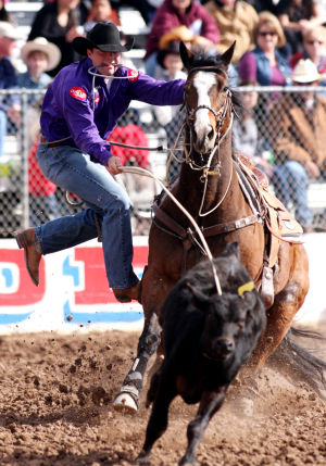 Fiesta De Los Vaqueros: Will Howell of Stillwater, Okla. lassoes a steer and moves to tie it down during the tie-down roping event Friday.  - Randy Metcalf/The Explorer
