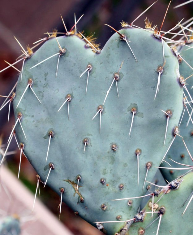 Prickly Valentine's Day