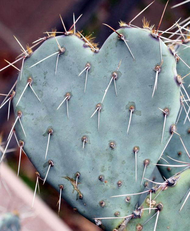 Prickly Valentine's Day