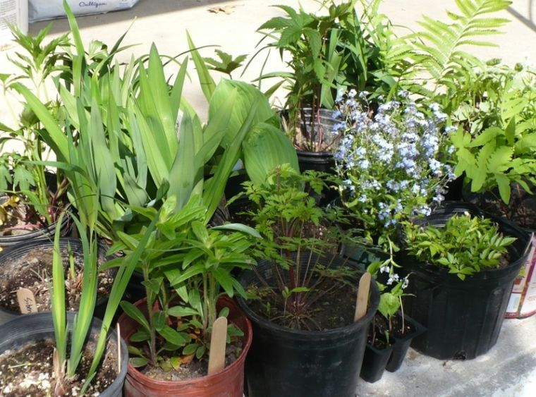 Moondance Patio Homes plant sale Oct. 5