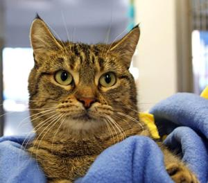 Cat survives frostbite, hypothermia