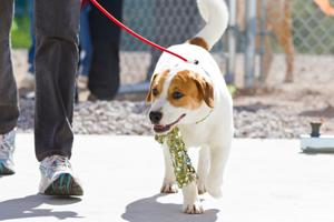 Pima Animal Care Center dog