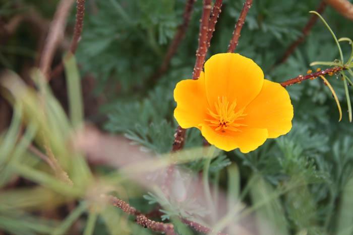 Soule Garden: January in the Garden