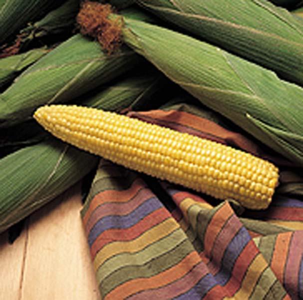 It's corn time