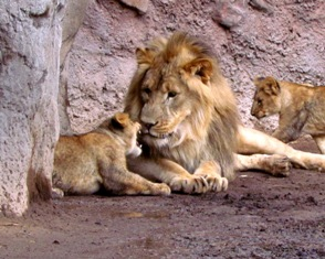 A dad and his cubs