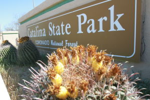 Catalina State Park: Catalina State Park is still a community treasure after 30 years. - Randy Metcalf/The Explorer