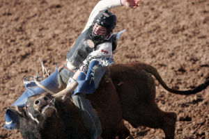Fiesta De Los Vaqueros: Clayton Savage of Casper, Wyo. takes Latchman for a ride during the bull-riding event in the Fiesta de los Vaqueros Friday.  - Randy Metcalf/The Explorer