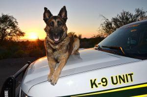 Pima County Sheriff Deputie's Canine Dies - PCSD