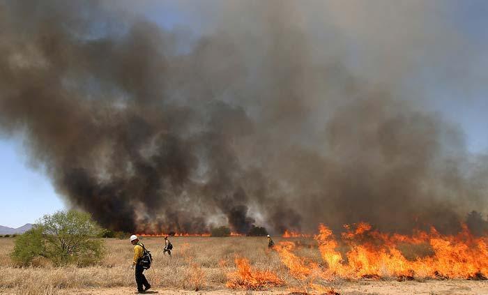 Staving off buffelgrass's burn