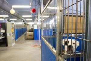 Oro Valley, Marana to pay more for Pima Animal Care Center