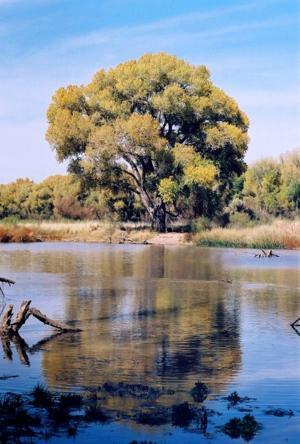 A Southern Arizona river walk