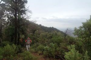 Mt. Lemmon Hiker Found: Search crews located the missing hiker Sunday morning. - PCSD