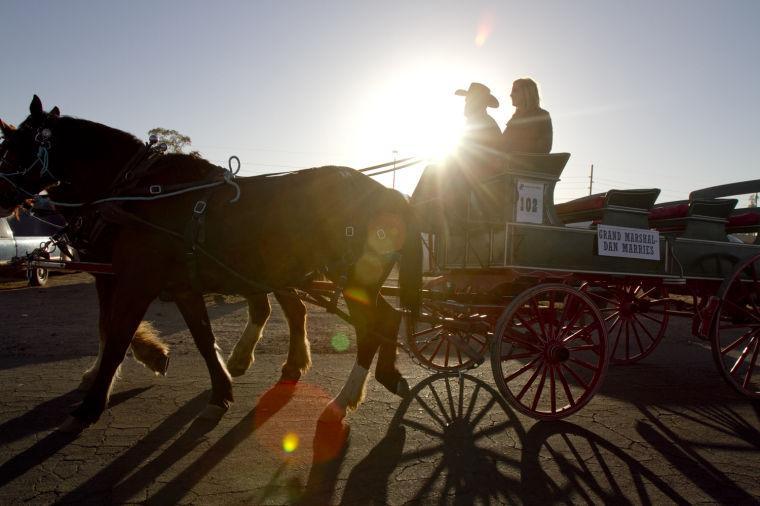 Tucson Rodeo Parade 2014