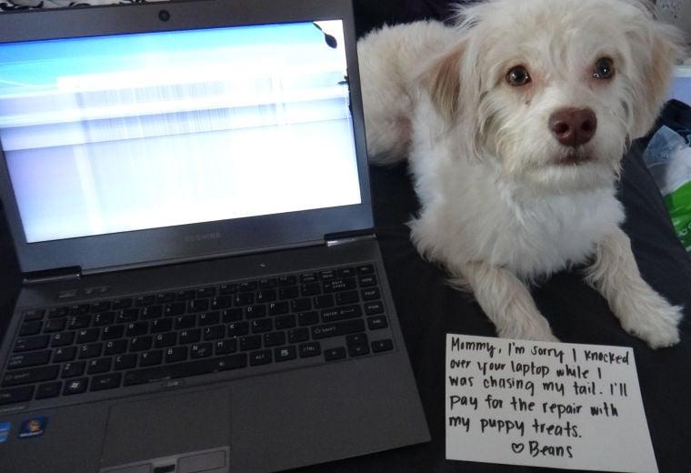 Dog and computer
