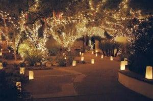 A million lights at Tohono Chul