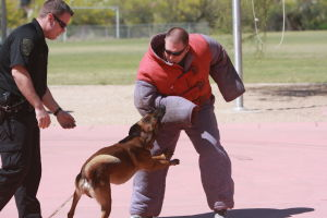 Drug Awareness Day: Oro Valley K9 police officer Kevin Peterson, left, observes as his dog Emmerson attacks Oro Valley officer Mike Gaare in a dog bite suit.  - Randy Metcalf/The Explorer