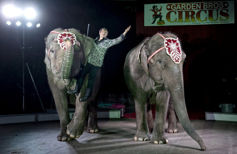 Circus Still Looking For New Venue Local News