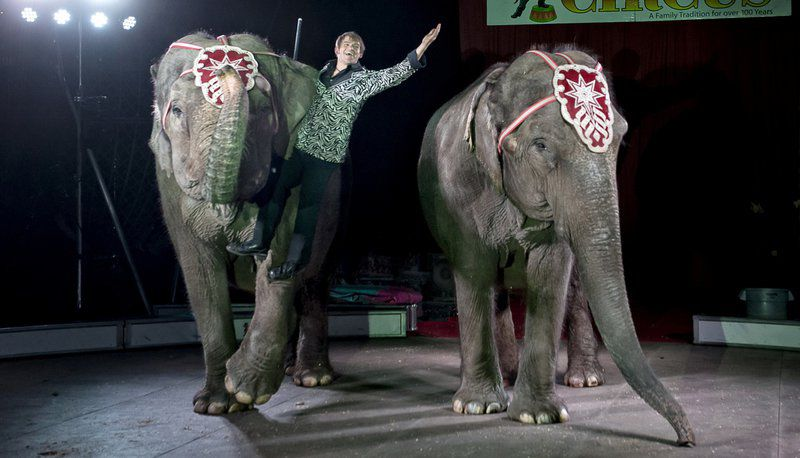 Circus Canceled On Safety Grounds Local News