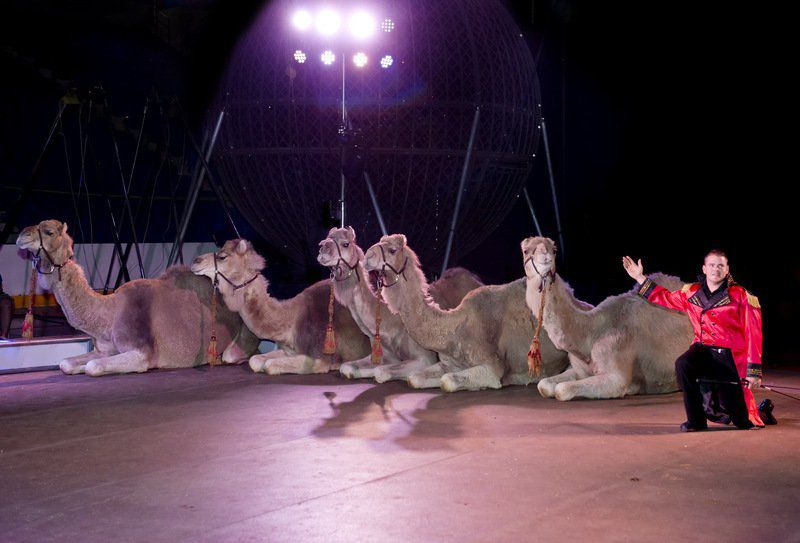 Circus Raising Big Top In Lowndes Local News