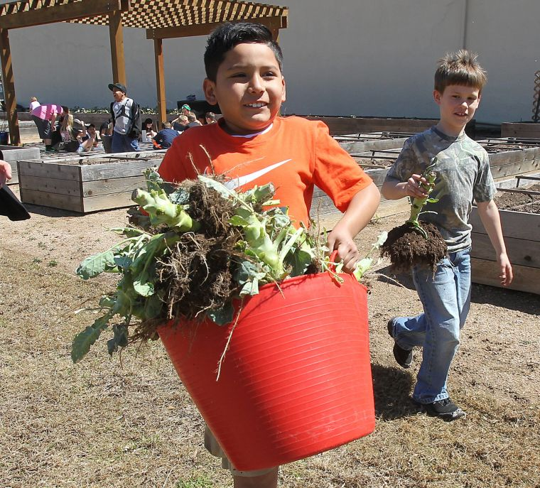 Schools Education3 18 19south Haven: Gardening Club For Kids Aims To Raise Awareness Of Environmental Effects