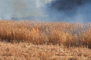 Dry, windy conditions prompt burn ban