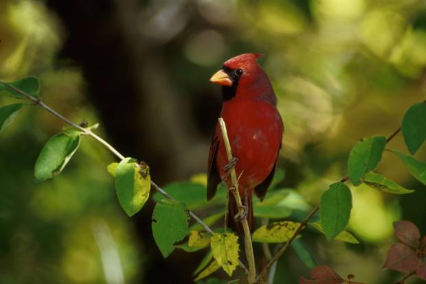 Dear Naturalist: Caring for injured birds