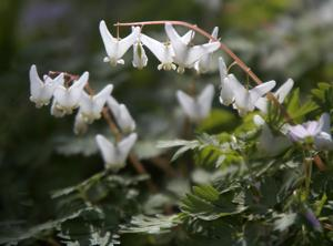 Photos: Photos of Spring