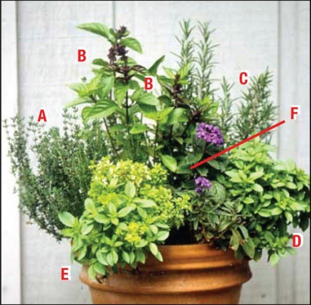 Inspiring ideas green scene plans give gardeners guide for Container herb garden
