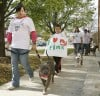 102211tsr-pitbull-walk-03