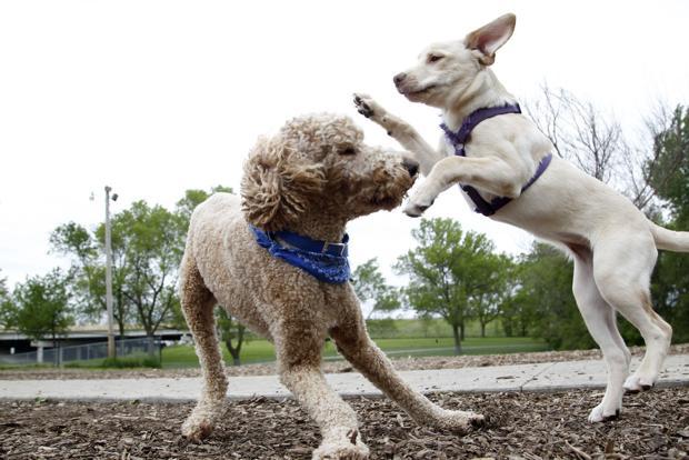 Puppy etiquette important at dog parks