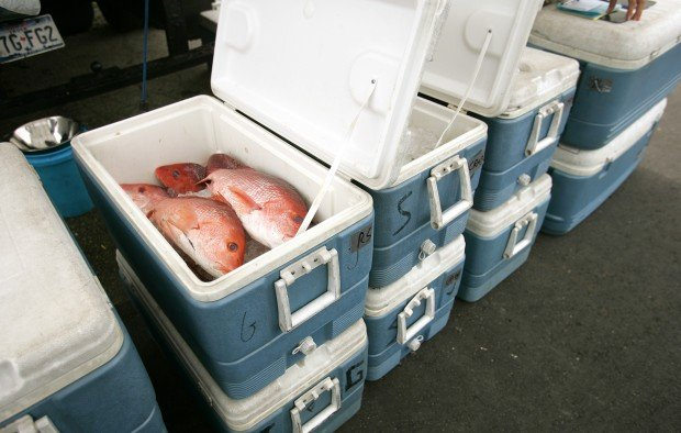 Red Snapper is one of several products Fabian Seafood Co. of Galveston, Texas, sold at the traveling seafood shop Thursday, May 20, 2010, in Cedar Falls. The Fabian Co. has been traveling to the Cedar Valley to sell seafood since the 1970s. (RICK TIBBOTT/ Courier Staff Photographer)