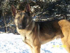 Willmar, Kandiyohi County K9 officers get names