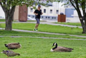 ICYMI: Council approves Lake Park feeding ban; Schott continues success at MTS
