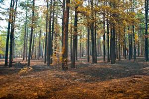 Wallow Fire Update - Alpine residents to return home tomorrow; 38% containment